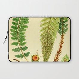Vintage Botanical illustration, 1916 (Fern) Laptop Sleeve