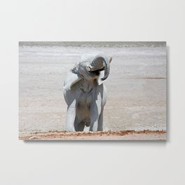 NAMIBIA ... Elephant fun II Metal Print