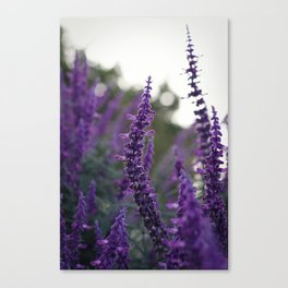 Long Purple Flowers Canvas Print