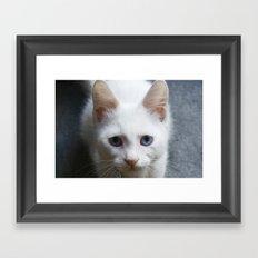 Turkısh Van Cat Framed Art Print