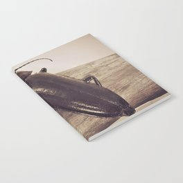 Viewpoints Notebook