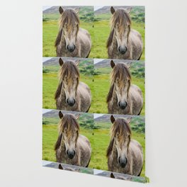 Beautiful, grey Icelandic horse portrait at meadow. Wallpaper
