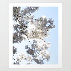 white sakura Art Print