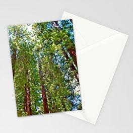 Muir Woods Study 18 Stationery Cards