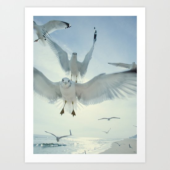 Seagulls {Five} Art Print