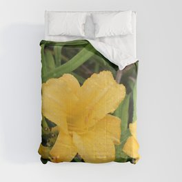 Yellow Day Lily 2 Comforters