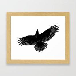 Crow In Flight illustration Framed Art Print