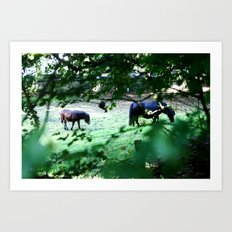 Pasture Through the Wood Art Print