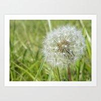 Dandelion clock - just blow Art Print