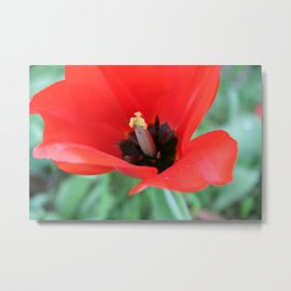 There's Nothing Like A Spring Stilletto  Metal Print