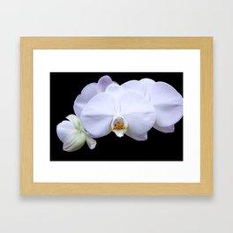 White Orchid2 Framed Art Print