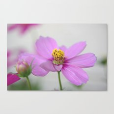 Sweet Cosmos Canvas Print