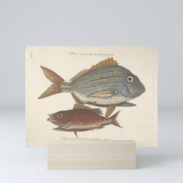 The Pork Fish and The Schoolmaster Vintage Scientific Illustration, 1777 Mini Art Print