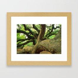 Angel Oak 3 Framed Art Print