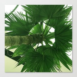 Upshot of Neon Green Palm Tree Canvas Print