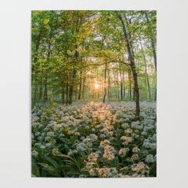 Bear's Garlic Forest Poster