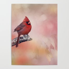 Male  Northern Cardinal perching on a branch Poster