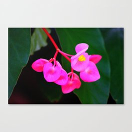 Bold Flower Canvas Print
