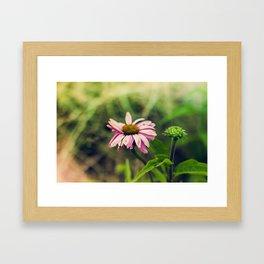 Daisy V Framed Art Print