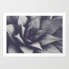 Torch Plant Succulent Photo Print Wall Art Image Art Print