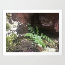 Muskoka Ferns Canadian Shield Art Print