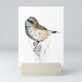 Mr Riroriro, the New Zealand Grey Warbler Mini Art Print