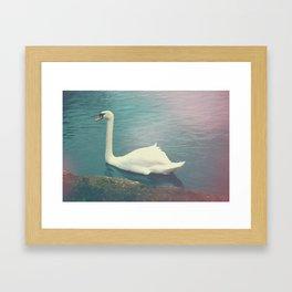 Oxford Swan Framed Art Print