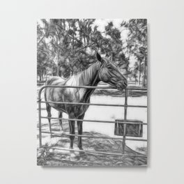 Beautiful horse waiting at a farm gate in Queensland Metal Print