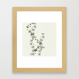 Pimpernel climbs Framed Art Print