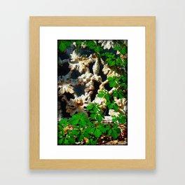 Vine on Wrought Iron Bench Framed Art Print