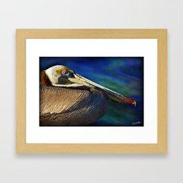 Pelican Indian River Lagoon 1 Framed Art Print