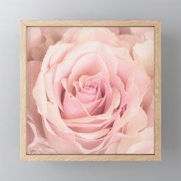 A rose is a rose - Wonderful pink Rose flower Framed Mini Art Print