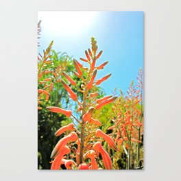 Orange buds in the skys Canvas Print