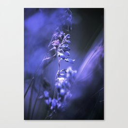 RED SPANGLES no3C-Blue Canvas Print