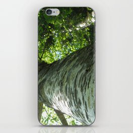 Sacred Birch by Mandy Ramsey, Haines, AK iPhone Skin