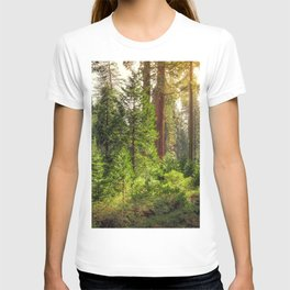 Images California USA Kings Canyon National Park Nature Spruce Parks forest Trees park Forests T-shirt