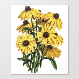 Black-Eyed Susan Yellow Flowers Painting Canvas Print