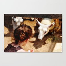 Girl Feeds Sheep Canvas Print