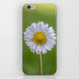 White daisy close up iPhone Skin