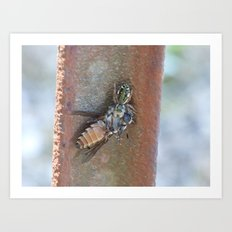 spider and horsefly Art Print