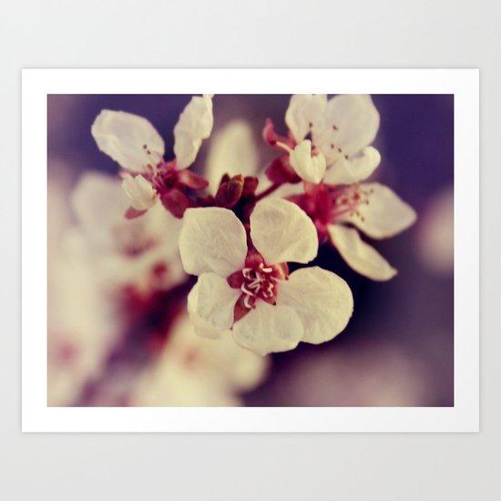 Blossom... Art Print