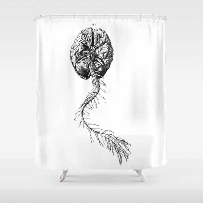 Brain Anatomy Shower Curtain By Stilleskyggerart