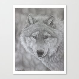 Wolf Pencil Drawing Canvas Print