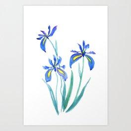 blue iris watercolor Art Print