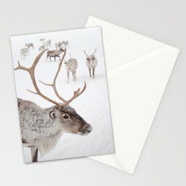 Reindeer With Antlers Art Print | Tromsø Norway Animal Snow Photo | Arctic Winter Travel Photography Stationery Cards