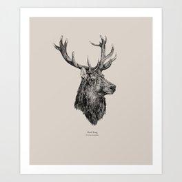 Red Stag [Cervus elaphus]  Art Print
