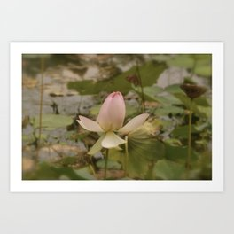 Faded Lily Pad Flower Art Print