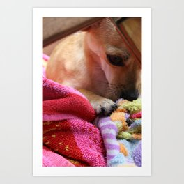 Perro Playing  Art Print