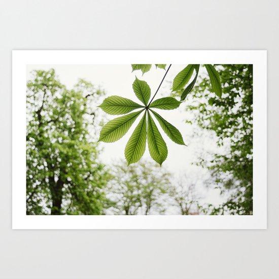 Green Spring Leaf Art Print