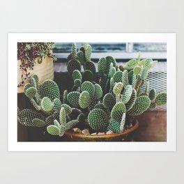 Prickly Art Print